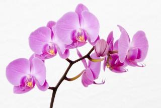 Салон красоты Орхидея в Лобне